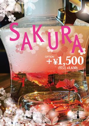 桜満開お花見SAKURAシーシャ季節限定販売