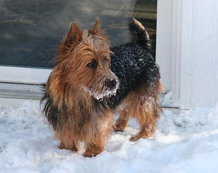Sharkee in the snow.JPG