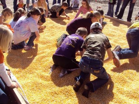 corn money pile