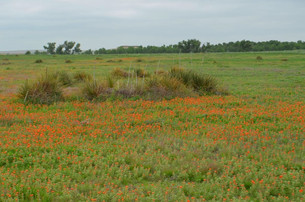 wildflowers on the ranch