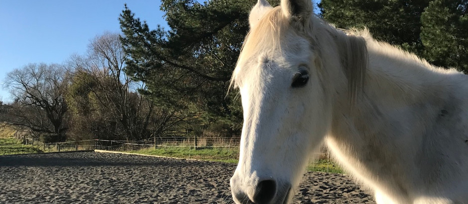 Horses are not metaphors