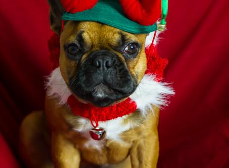 Christmas photos 2019 special