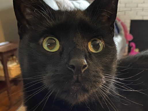 How Animal Communication prevented a cat from becoming homeless
