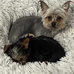 Sadie & Beau