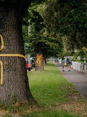 Carla O'Brien - Gift Trees