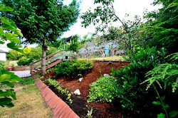 Backyard 3