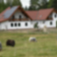 Yak- und Alpakahof in Wielandsberg bei Heidenreichstein, Bezirk Gmünd, Waldviertel, NÖ, Ferienwohnung