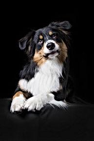 Coachdogs / Coaching mit Hund