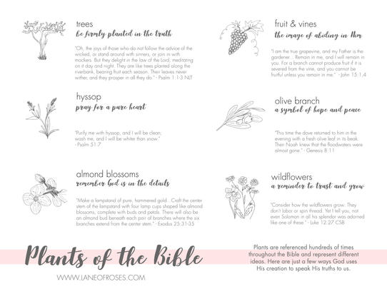 Reference Sheet: Plants of the Bible