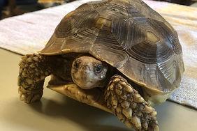 New tortoise.jpg