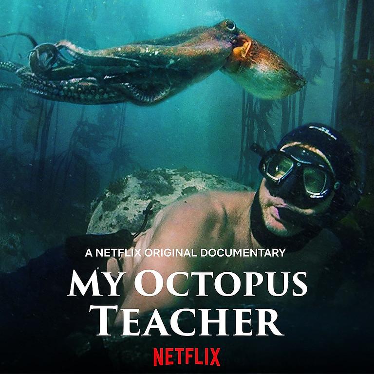 ZERO Climate Cinema Presents - My Octopus Teacher