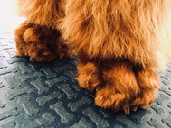 Poodle feet before...