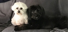 Ozzy and Lulu at home
