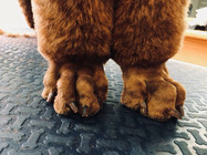 Poodle feet after...
