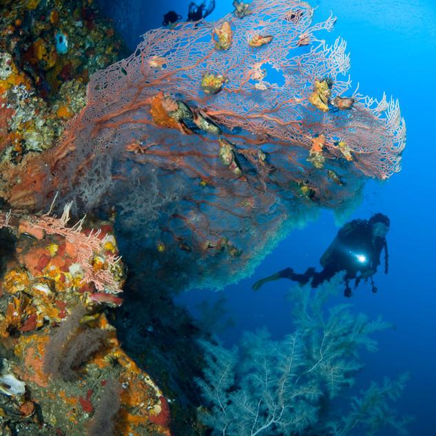 Dive Diver.jpg