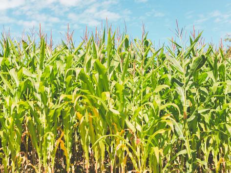 How Monsanto aka Evil Corp is Making Us Sick