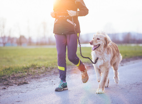 Workout With Your Doggie