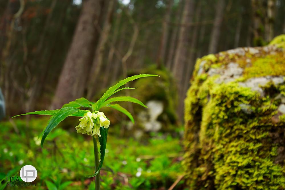 Naturfotograf Tirol - Lisa Photography - Fotograf Kufstein - Lisa Rupprechter