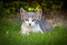 Tierfotografie - Fotograf - Naturfotos - Lisa Rupprechter - Lisa Photography - Fotograf Kufstein