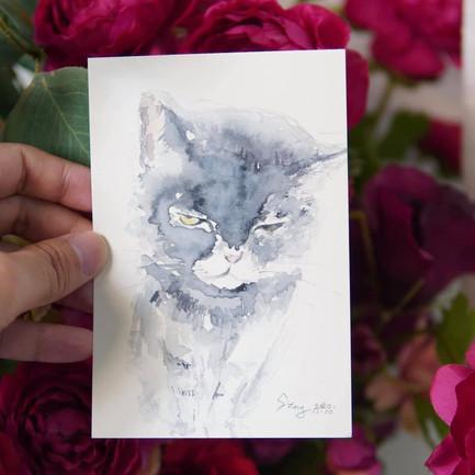 這隻老貓,有種老氣橫秋的感覺!酷死了!  畫作尺寸:6吋 (10.5cm x 15.5cm) 價錢:$480 🎊 附送電子檔 ✨ 附送畫框,提供裝裱服務✨