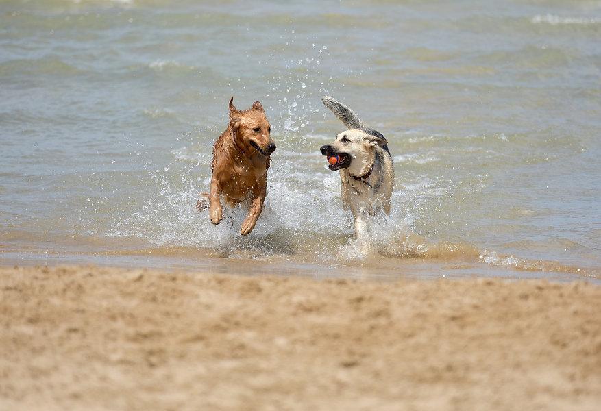dog-1411397_1920.jpg