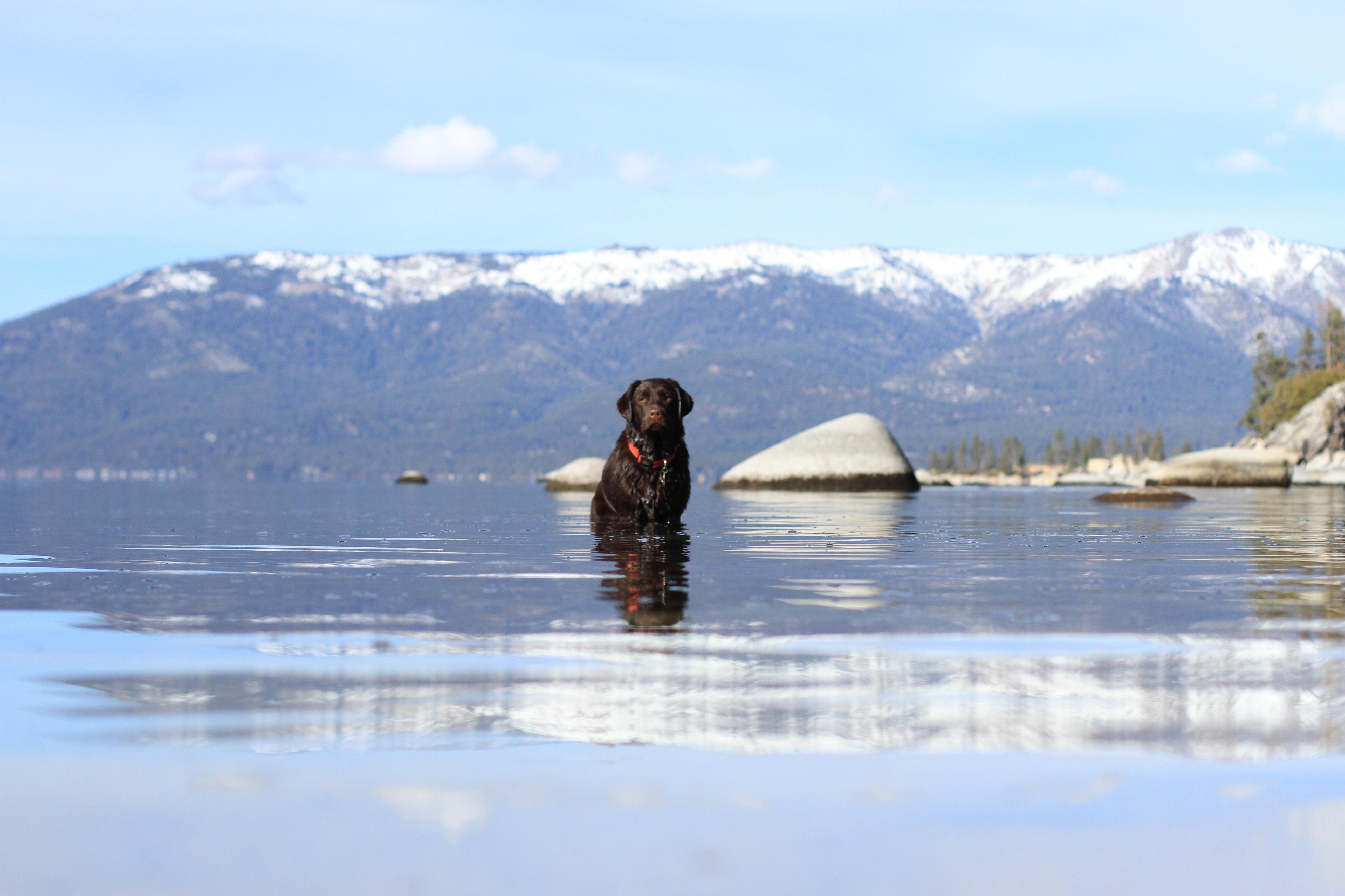 Coastal Canine Rehabilitation | Kittery, ME | Mobile