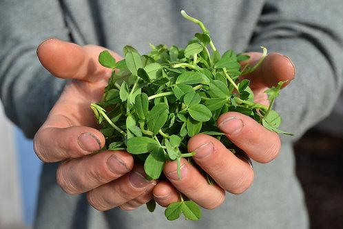 Pea Shoots 4 oz