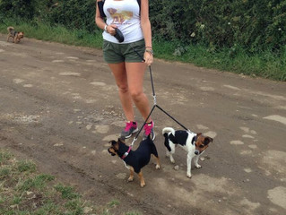 Sponsored Dog Walk in aid of Medical Detection Dogs