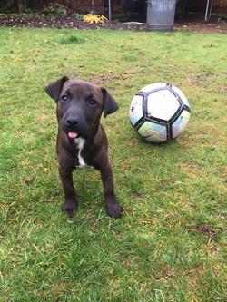 Molly - Terrier