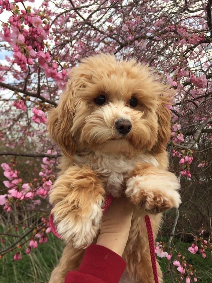 Daisy Doo