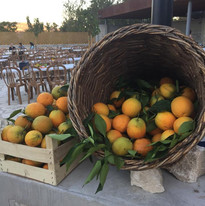 orange4.jpg
