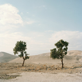 trees_west