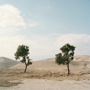 1_TreesWest.jpg