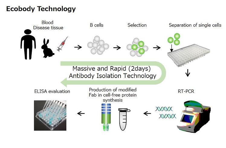 Ecobody Technology