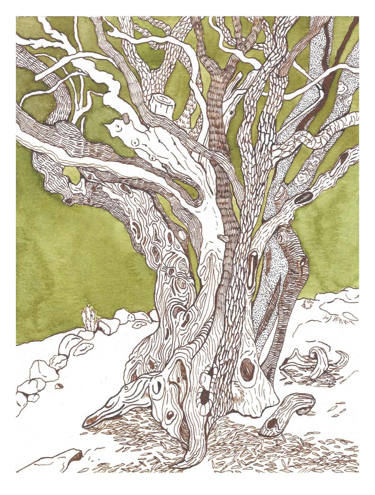 Olive tree web.jpg