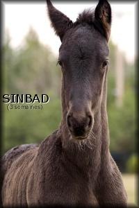 i_Sinbad3weeks2