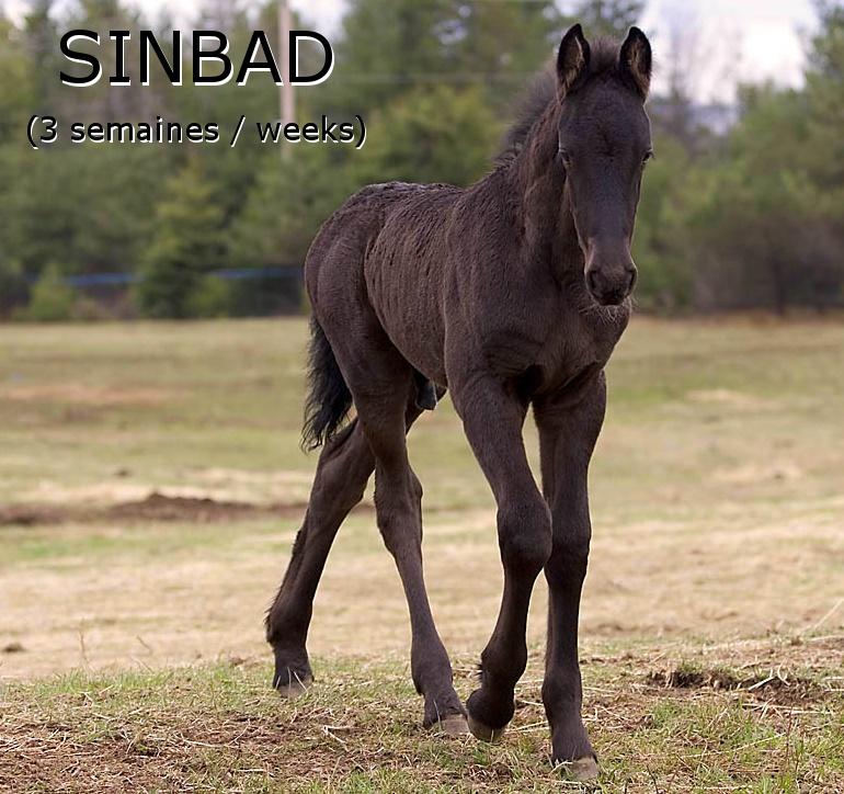 Sinbad3weeks3