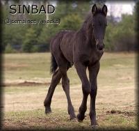i_Sinbad3weeks3