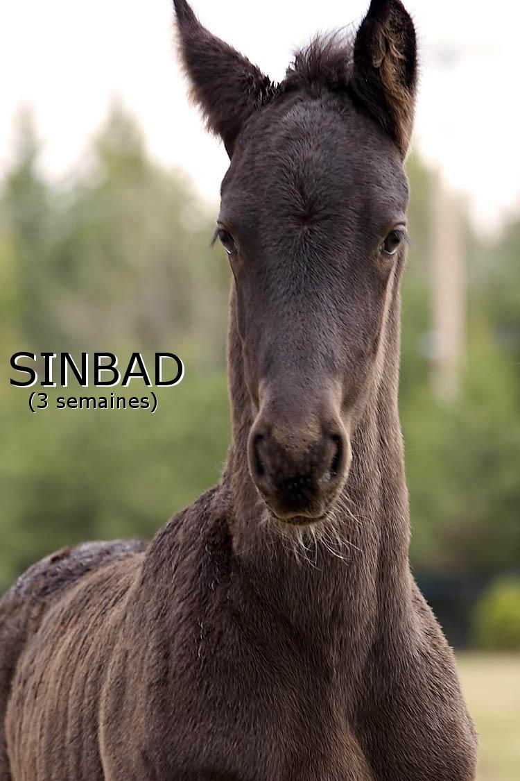 Sinbad3weeks2