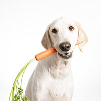 A dog holding a carrot in it's mouth..jp