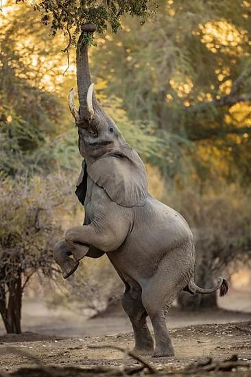 Silvija_Elephant01.jpg