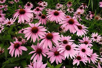 magnus come flower.jpg