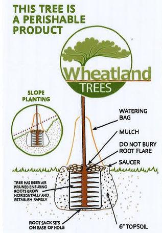 Planting instructions2.jpg