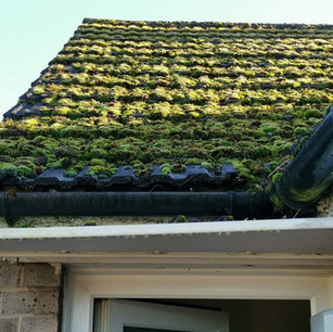 Moss overed roof