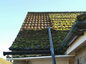 Moss being cleaned from a roof.JPG