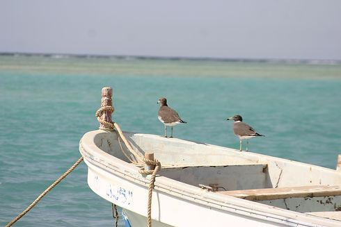 Birds on boat.JPG