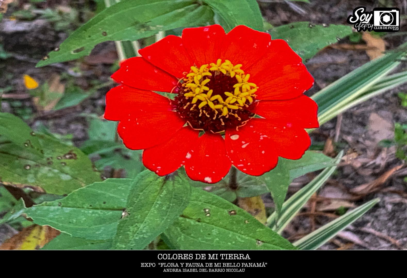 """Exposición Colectiva de los socios del Club de Foto en Panamá """"Flora y Fauna de mi bello Panamá""""."""