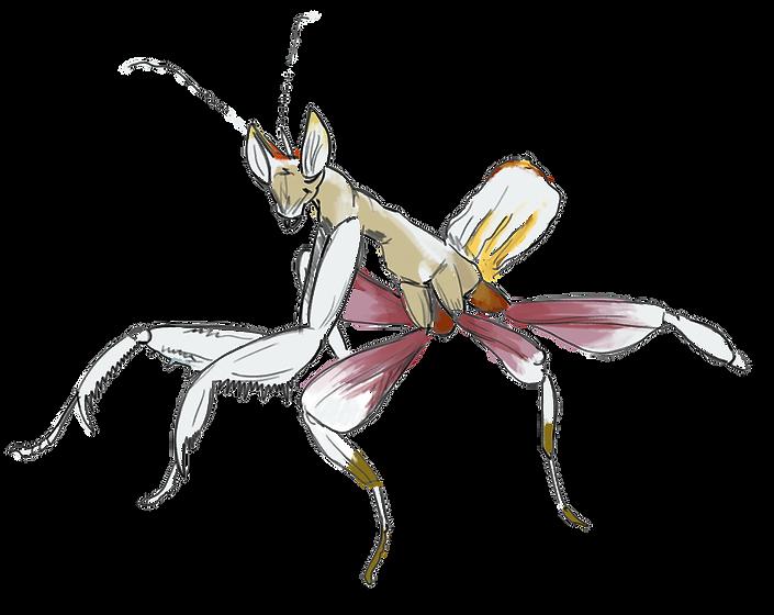 mante-religieuse-orchidee_Fourmis-bio