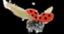 coccinelle_fourmis-bio