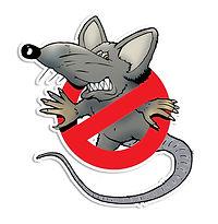rat-4747230_1920.jpg